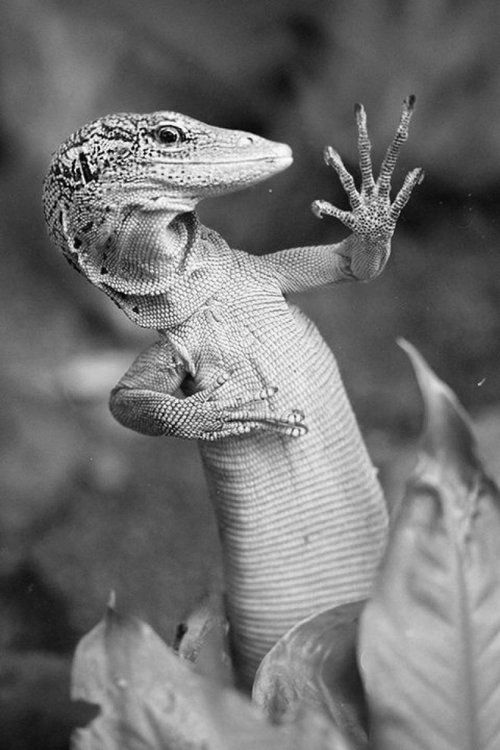 Damn...broke a nail.  (from 9GAG.com, Ridiculously Photogenic Lizards - original in color) #animals