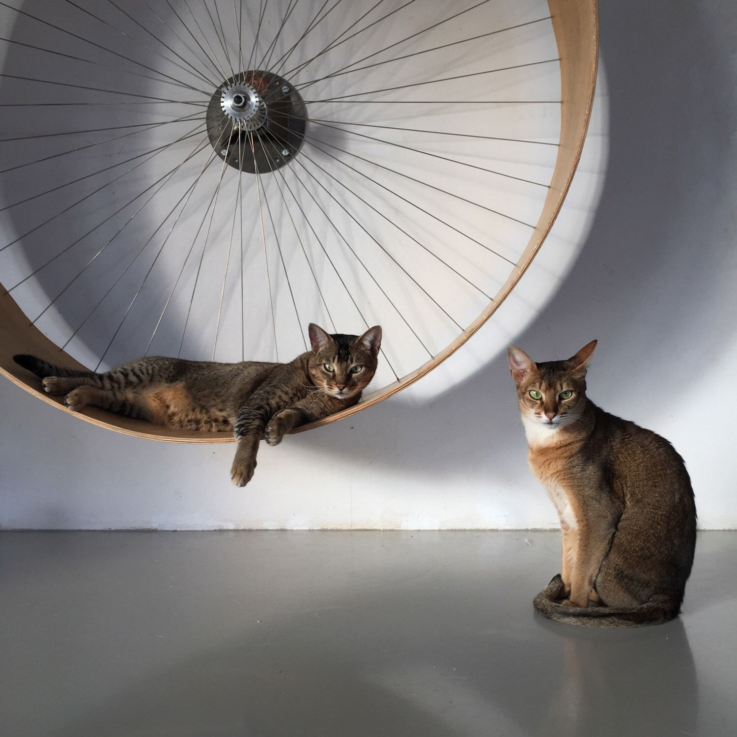 The wall cat wheel // the wall bike for cats by
