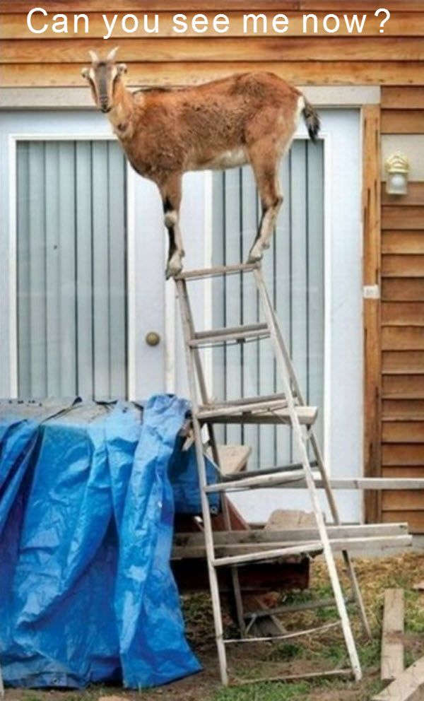 Balancing act illustrates how to stand on top of a latter and not to fall down. I don't think that I'll be trying this one any time soon.. You Might Enjoy This: Fox hunting Exotic pets Funny Owl Pics Pictures of penguins Frog with an attitude