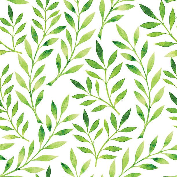 A Drawing Of Pattern Green Leaves On White Background Vector Art Ilration