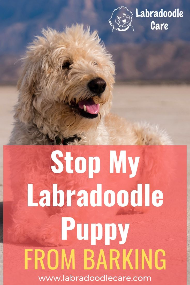 How do i stop my labradoodle puppy from barking