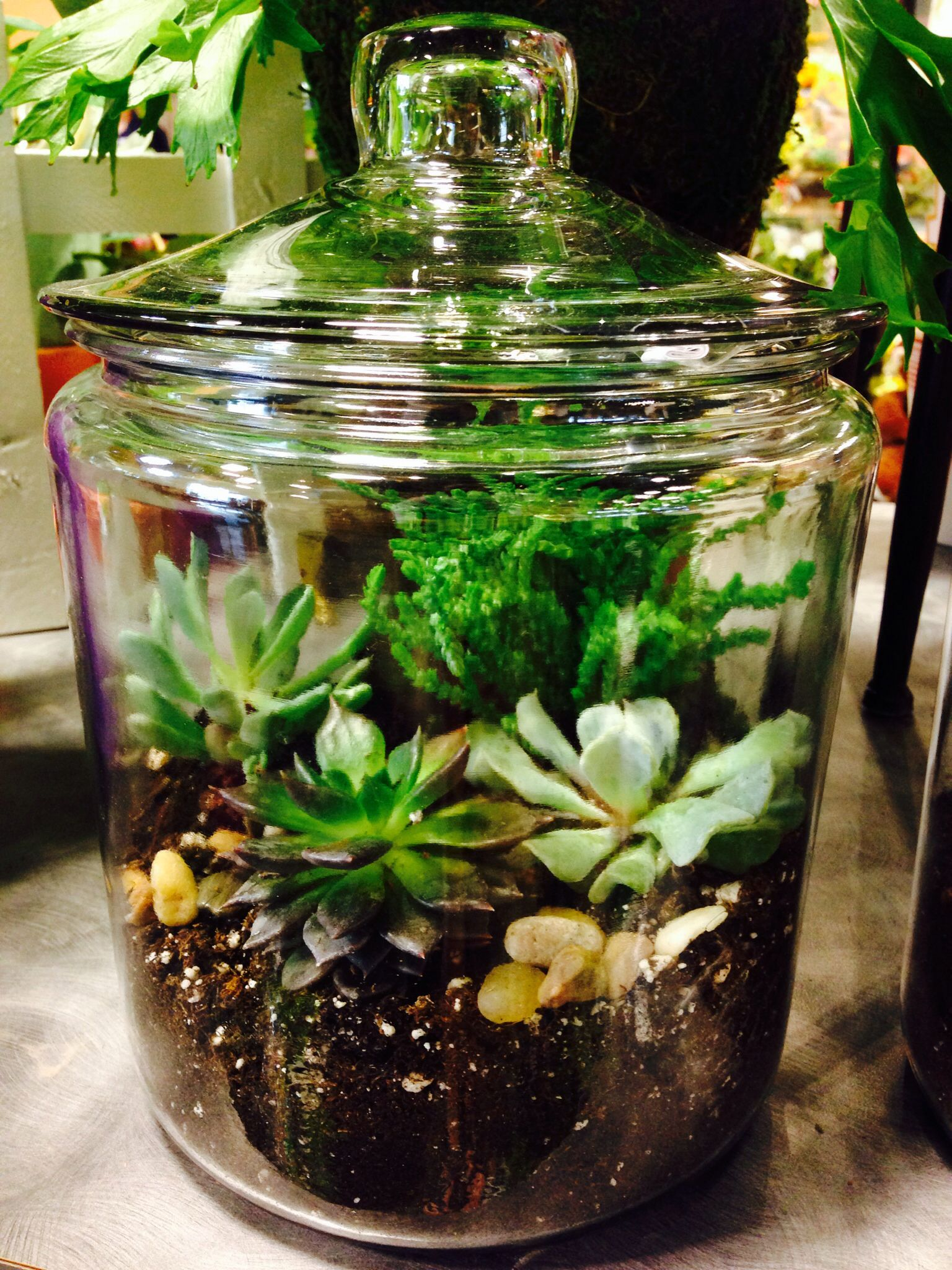 Terrarium Made With Succulents In A Glass Cookie Jar I Could Do