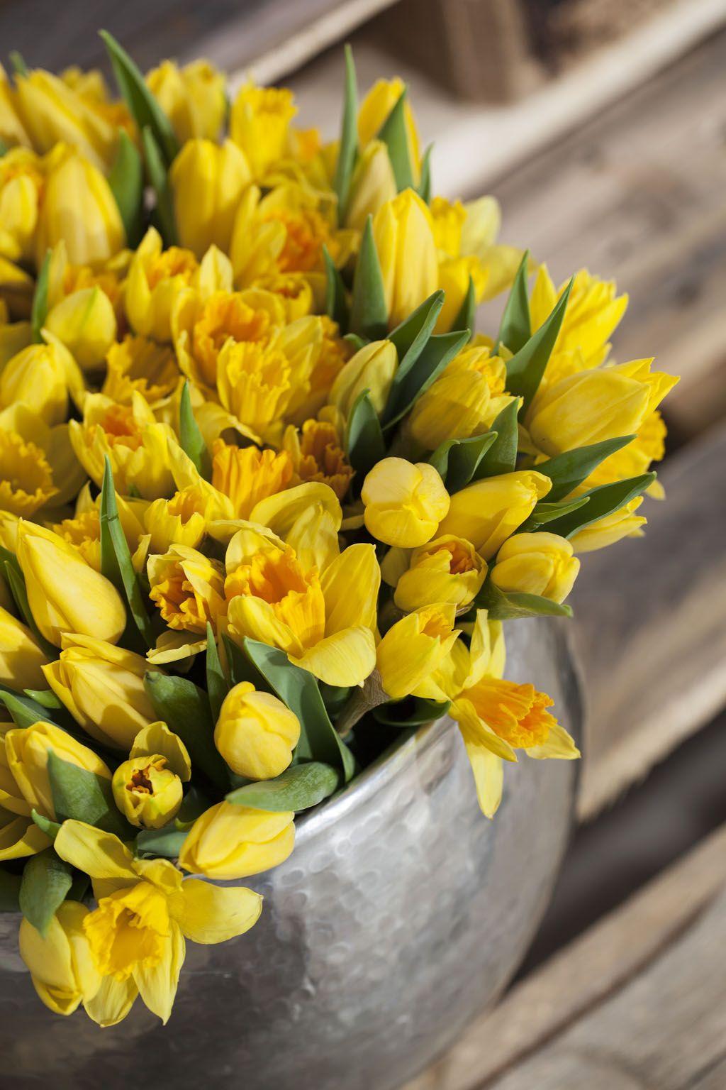 Gule tulipaner og påskeliljer skaper den rette påskestemningen
