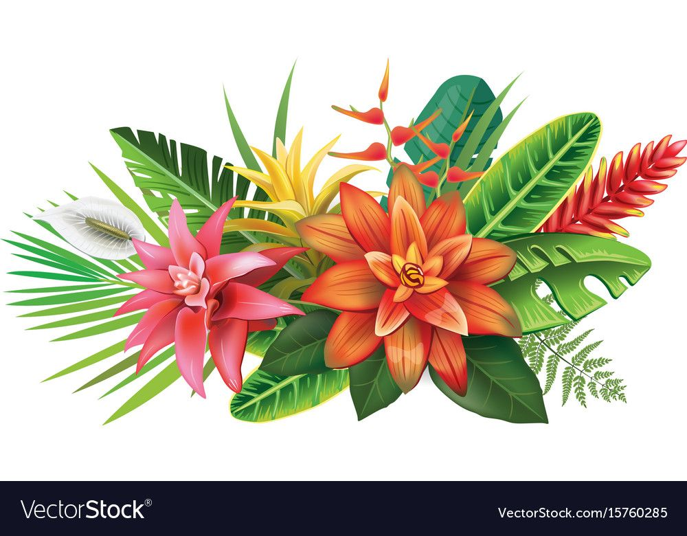 Arrangement From Tropical Flowers And Leaves Download A Free Preview Or High Quality Adobe Il Tropical Flowers Illustration Flower Drawing Flower Illustration