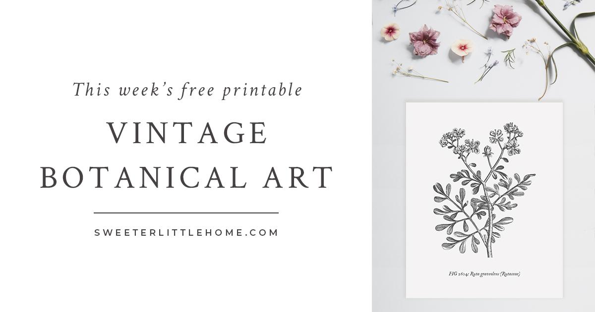 Free Vintage Botanical Prints Wall Art Botanical Prints Wall Prints Free Vintage Botanical Prints