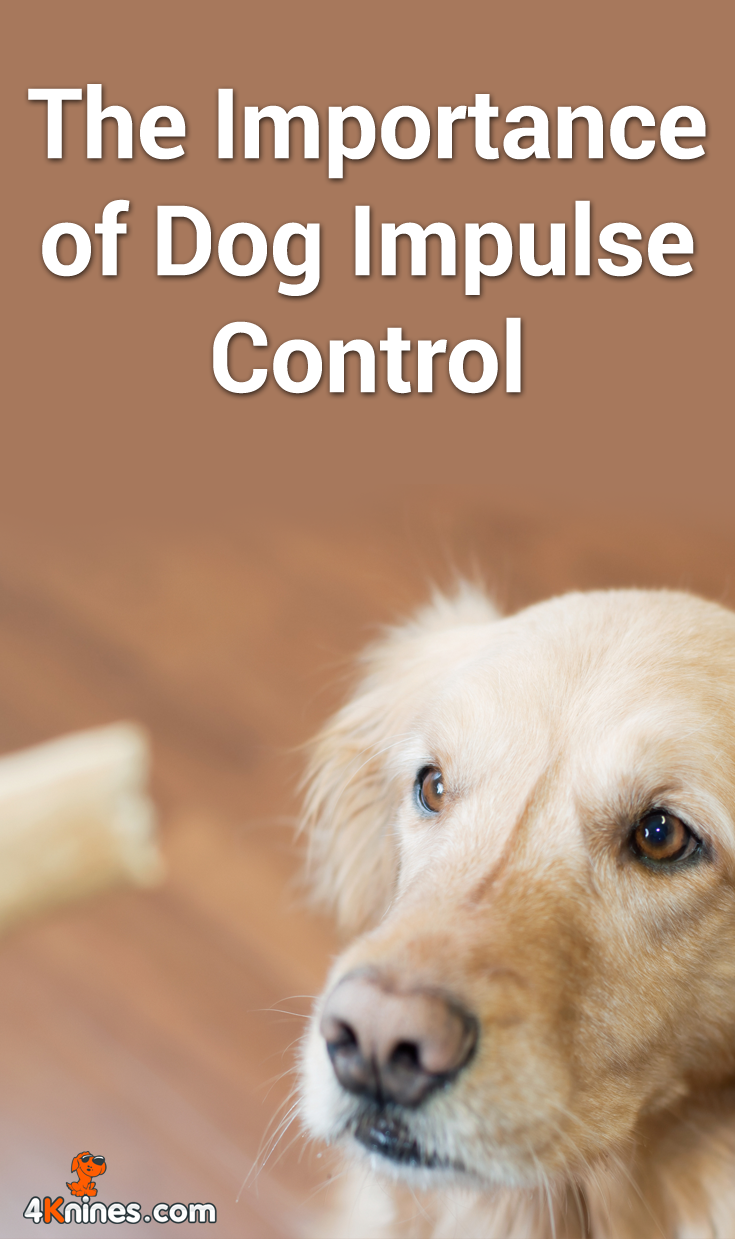 How To Train Your Dog Top Training Tips Dog Care Dog Safety Dog Training