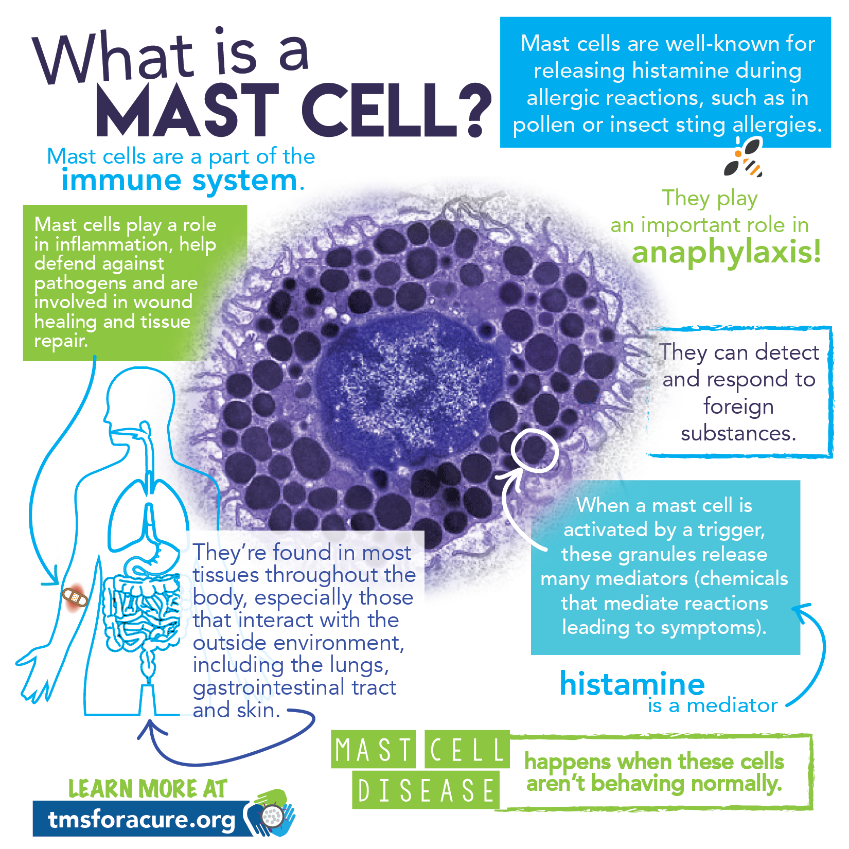 Mast Cell Activation Syndrome Mcas This Is What Happens When Mast Cells Aren T Working Properly Mast Cell Activation Syndrome Mast Cell Low Histamine Diet