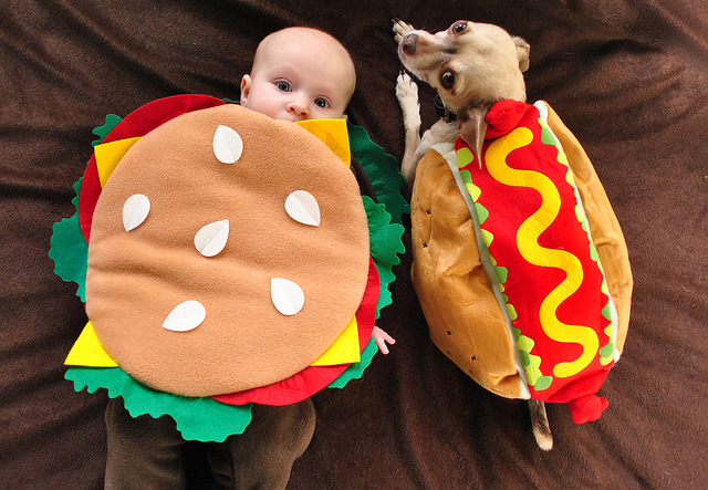 Burger Halloween Costume Dog In A Dog Costume Burgers Dogs