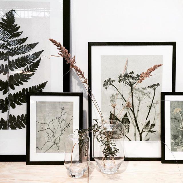Annonce | Der er prints på programmet i dag og blandt favoritterne er de botaniske illustrationer fra @pernillefolcarelli #elledecorationxnorthmodern #northmodern