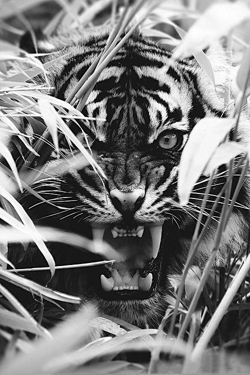50 Beautiful Wild Animals