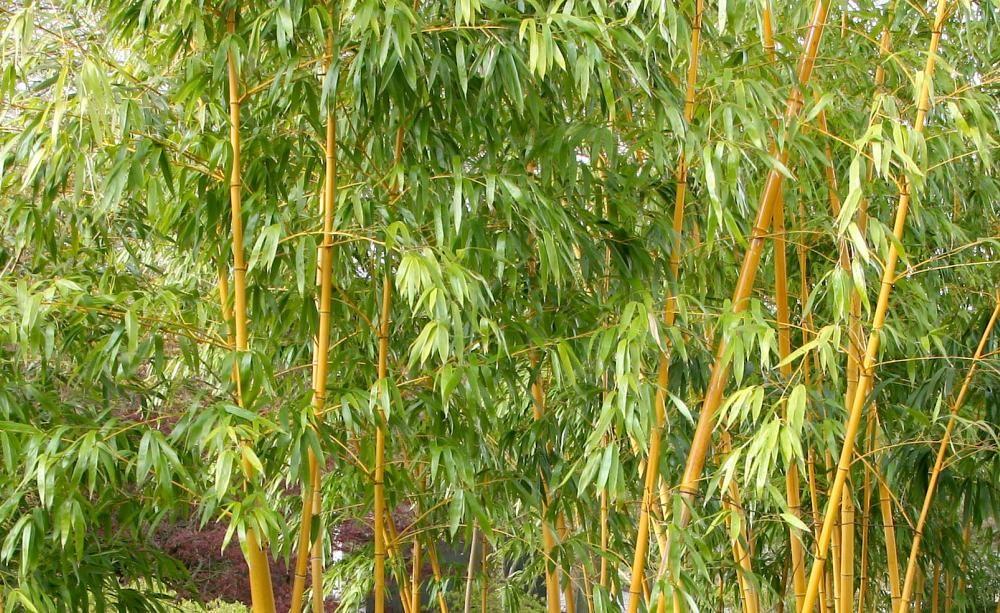 Pflanzbeispiele Mit Gräsern beet beispiele mit bambus