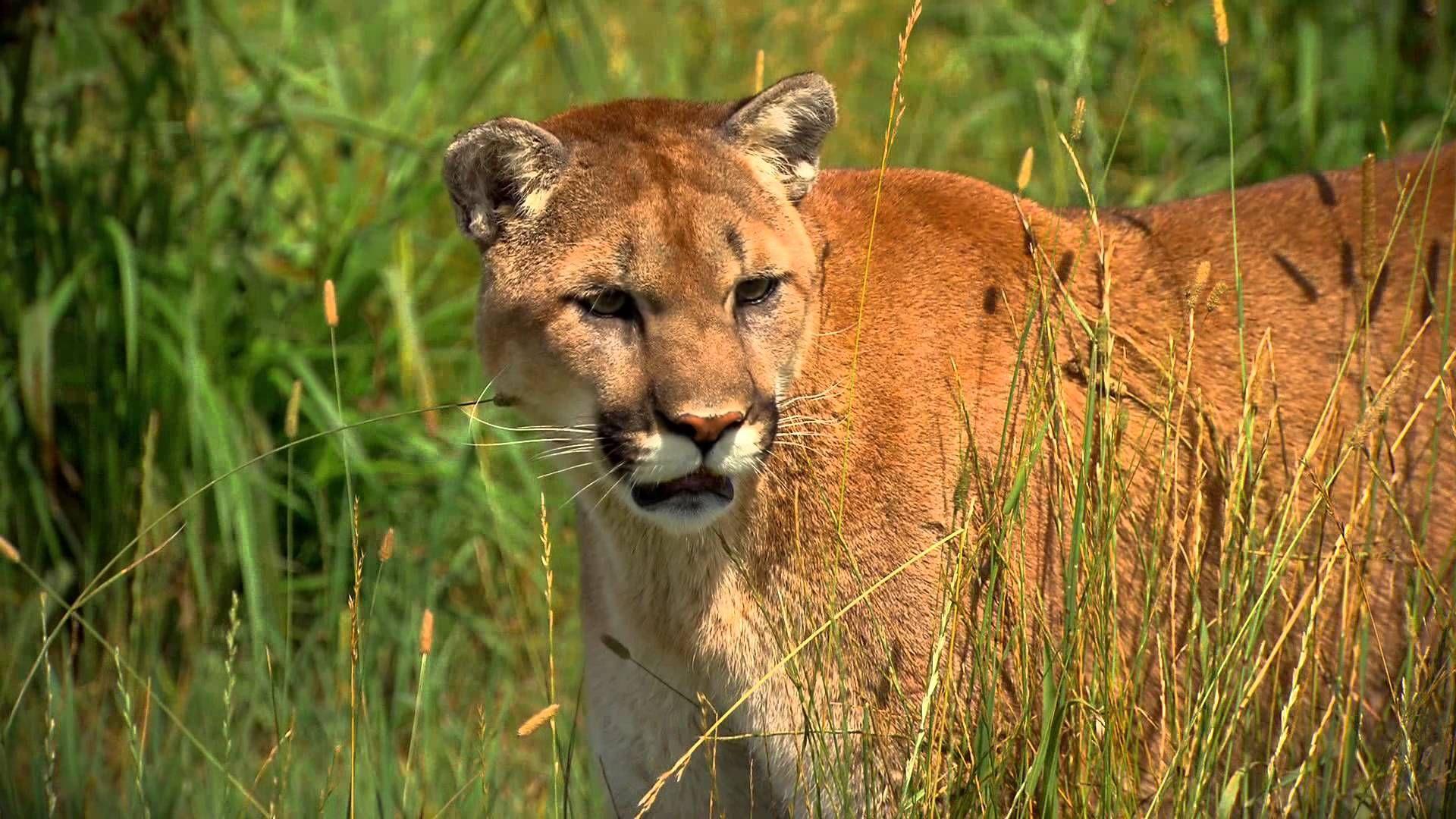 The Wildcat Sanctuary is a 501c3 nonprofit, nokill big