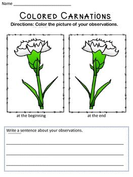Colored Carnations   Comprehension questions, Science experiments ...