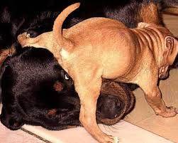 fotos de perros graciosas - Buscar con Google