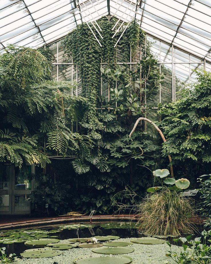 Green House Bluhende Pflanzen Botanischer Garten Schattengarten