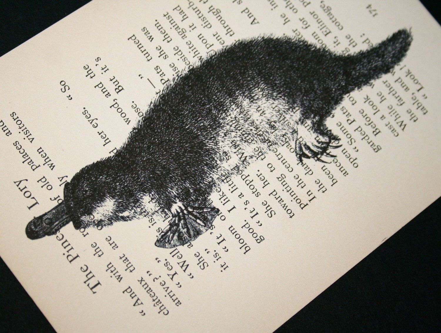 platypus print on vintage book page 5 x 7 1000 via etsy