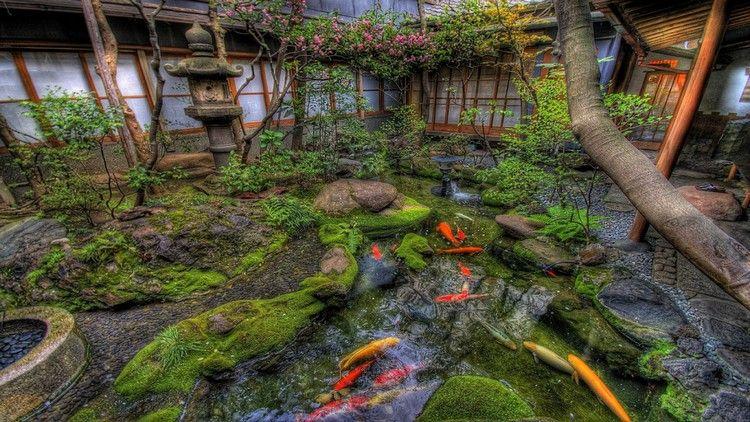 bassin carpe koï d\'un jardin japonais avec plantes vertes, plantes ...