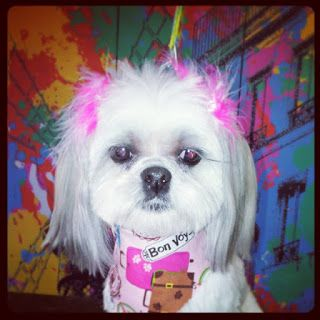 Shelby S Pet Styles Dog Groomer Dog Grooming Cat Groomer Cat Grooming Pet Groomer Pet Grooming Oklahoma Oklahom Pet Style Pets Peace Love Dogs