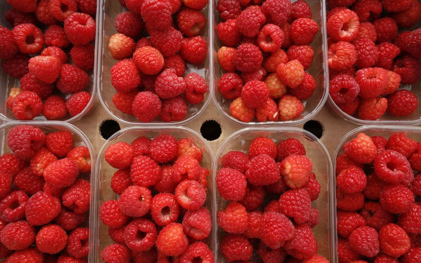 12 things you didn't know about raspberries Raspberry