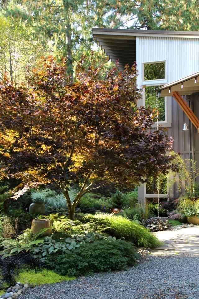 Ideen Baum Vorgarten Japanischer Ahorn Herbst Blumen 6 Streucher