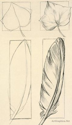feather, ivy, leaf, drawing objects, beginner art lessons #artanddrawing