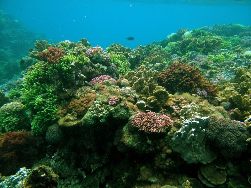 Le più belle barriere coralline del mondo, ecco i migliori posti per immersioni e snorkeling | WePlaya