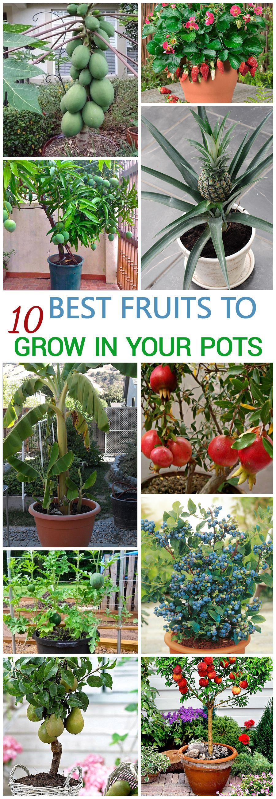 10 Best Fruits To Grow In Your Pots Fruit Garden Container Gardening Growing Fruit