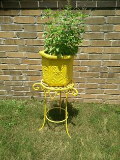 ab837772fc1a Tulsi madam , concrete pot from home depot and plant stand picked at a yard  sale. Spray painted both with rustoleum paint.