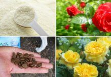 If You Use Cinnamon In The Garden These 6 Unbelievable Things Are Possible is part of Rose garden Container - There are so many Cinnamon Uses in the kitchen but did you know it is so useful in the garden that it can transform your garden into lush and healthy place