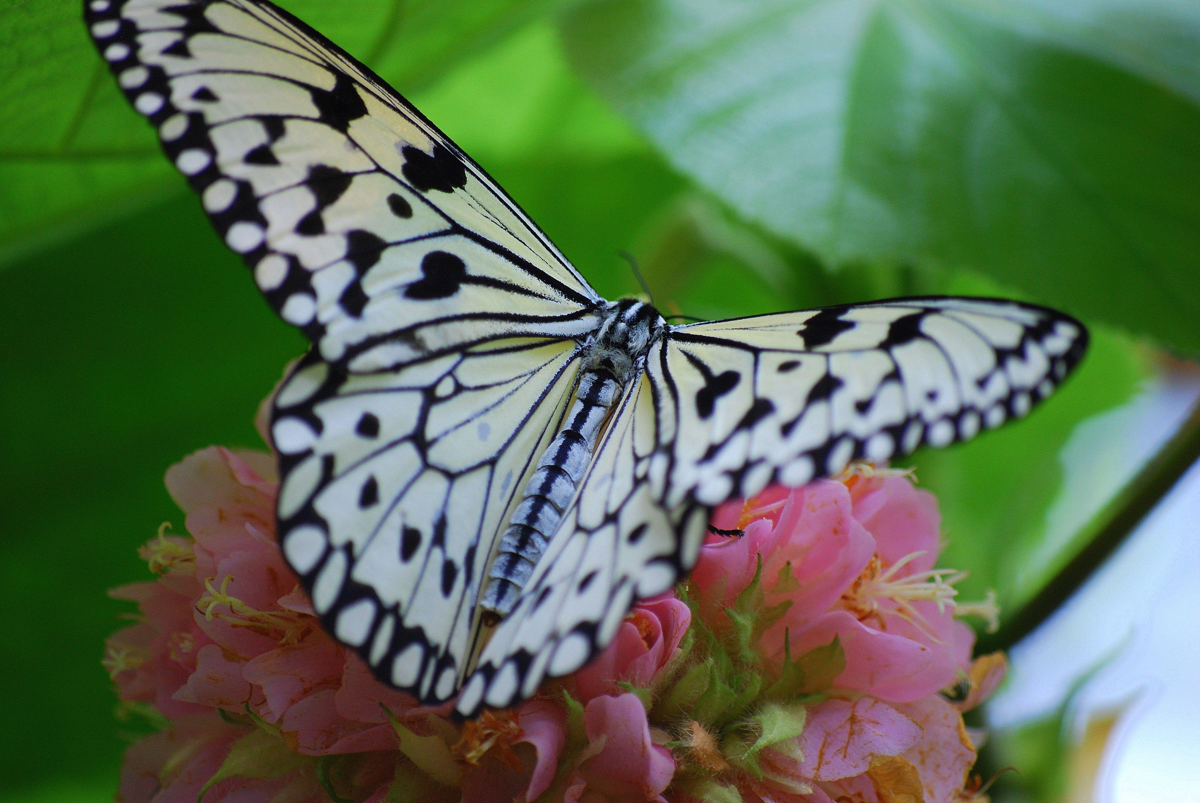 Butterfly Pavilion Butterfly pavilion, Butterfly