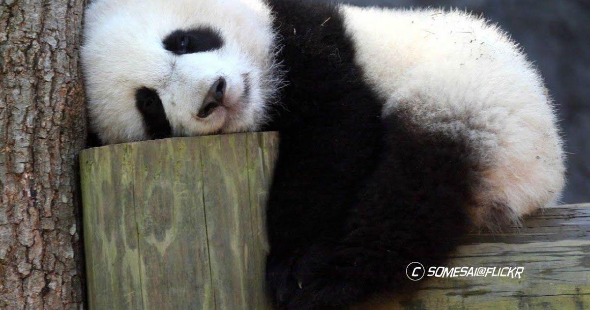 Menakjubkan 19 Gambar Lucu Ngantuk Mau Tidur Hewan Bisa