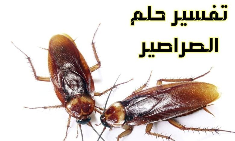 تفسير حلم الصراصير في المنام Pest Control Services Pest Control Pest Problem