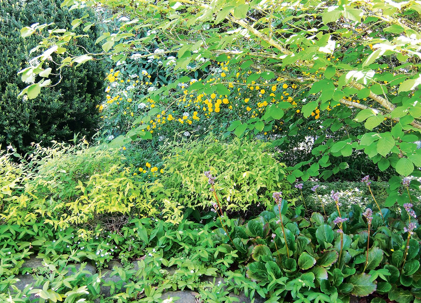 Gardening in the Fourth Dimension Types of plants, Large