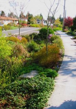Parking Strip Plant Selection Layout And Drainage For Natural Stormwater Green Architecture Landscape Architecture Landscape Design