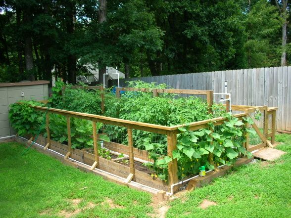 Raised Bed Vegetable Garden/Gate And Fence. Attached Right To Beds