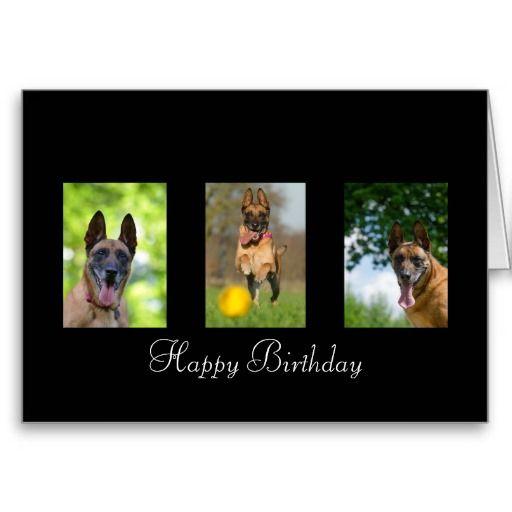 carte anniversaire chien malinois