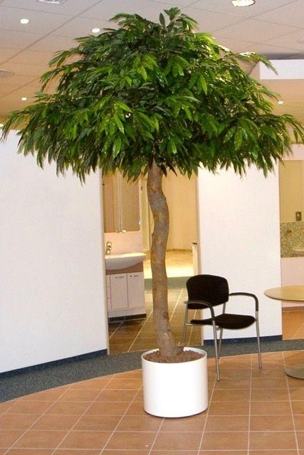 #Künstlicher Mangobaum #Maßanfertigung #Messen&Events #Individuelle Kunstbaumgestaltung #moderne Objektbegrünung nach Kundenwunsch #kompetente Beratung #Miet -und Kaufoptionen #Lieferung und Gestaltung vor Ort #künstlicher Dekobaum von #Bellaplanta