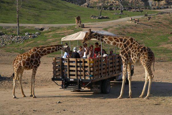 San Diego Zoo Safari Park San Diego Zoo Safari Park Wild Animal