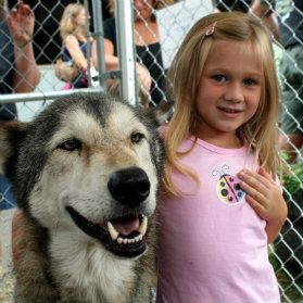 Howling Woods Farm Kids Can Meet The Wolves Wolf Dog Majestic Animals Wolf World