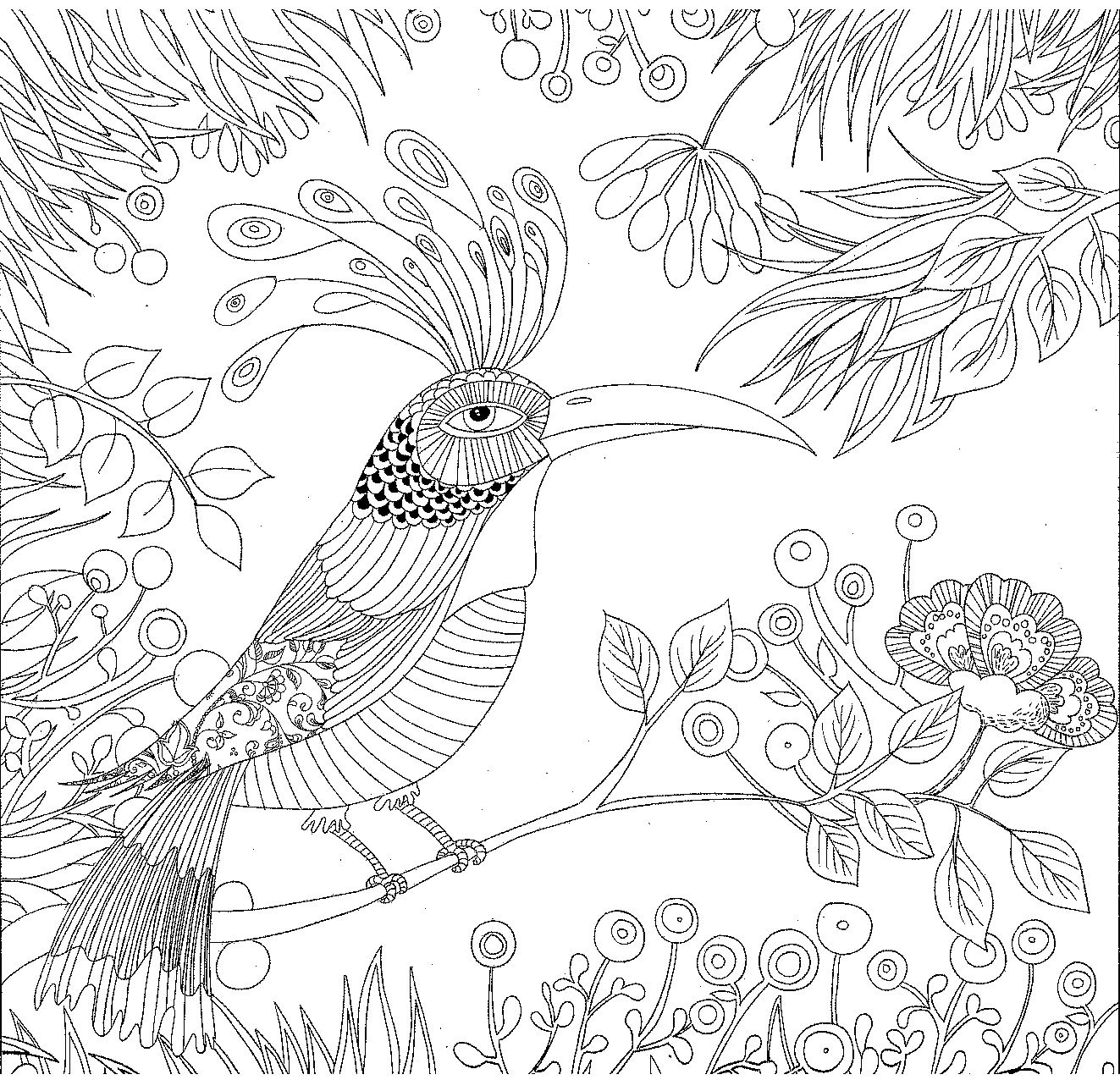 coloring cute exotic bird forest colorir coloriage | Pajaros 04 ...