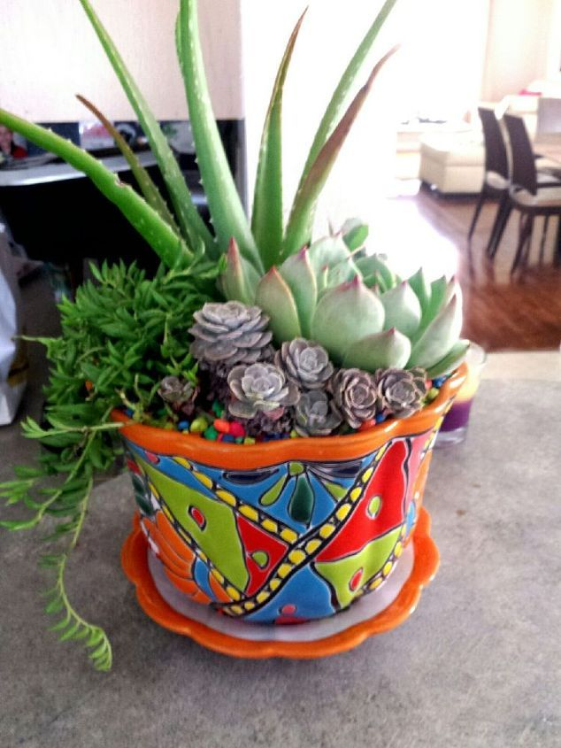 Plants For Mexican Pottery   Google Search