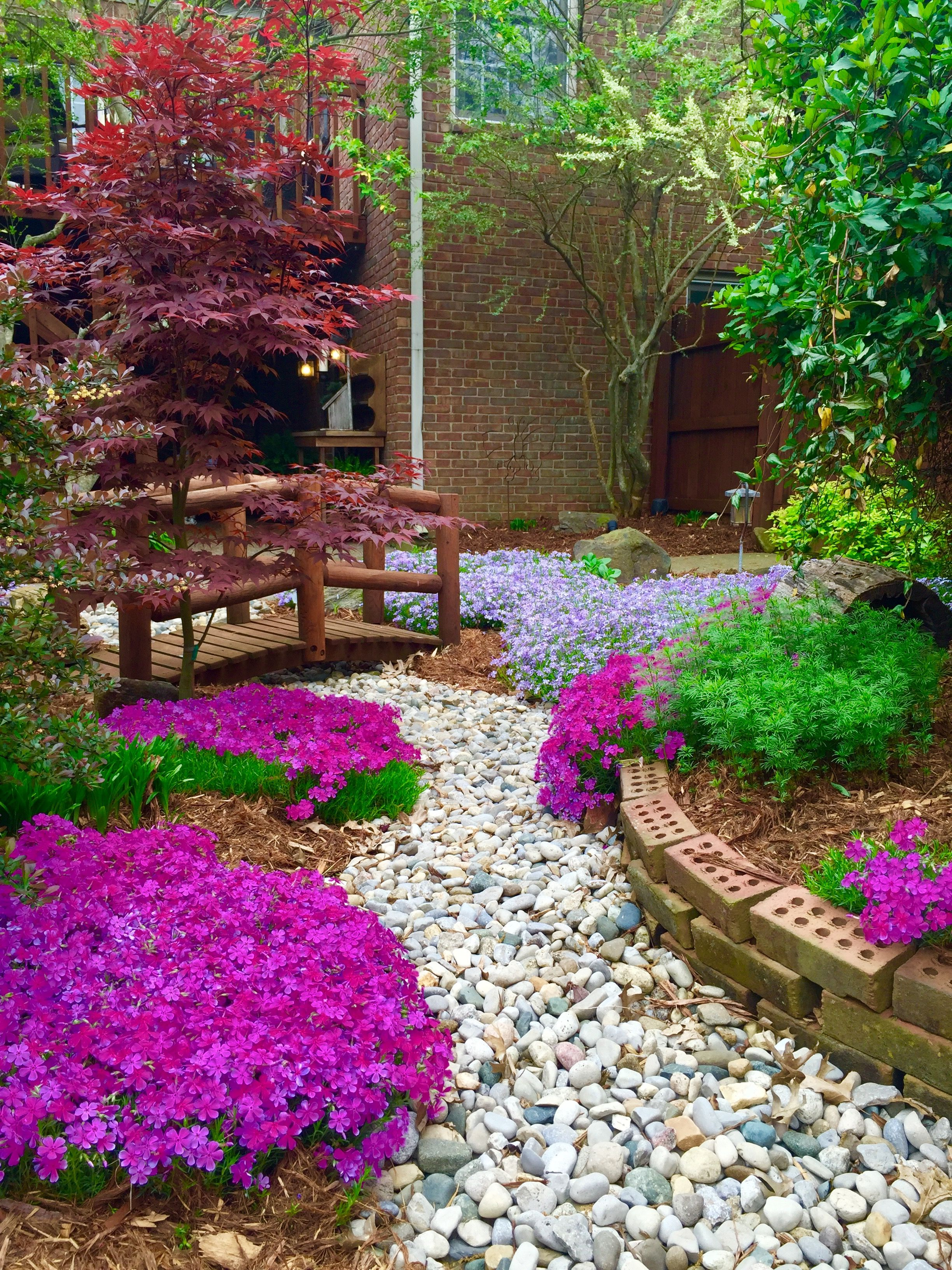 Dry creek bed with Creeping phlox in our backyard. April