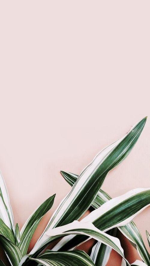 Tumblr plant wallpaper … | wlpr | Plant…