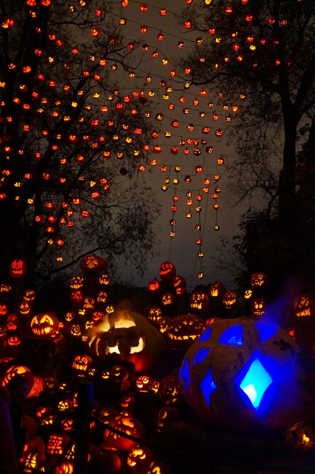10/19/14: roger williams park zoo jack-o-lanterns a to z   family