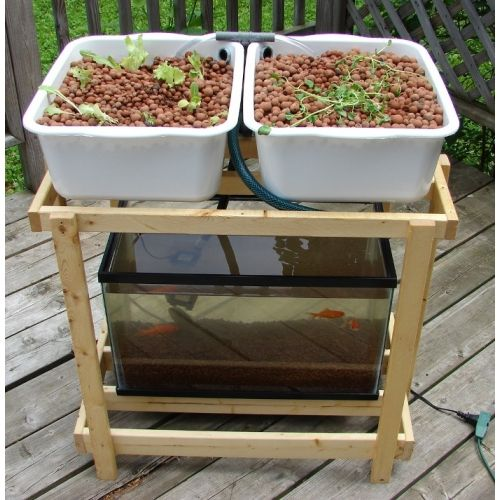 aquaponic system 10 gallon aquarium - Google Search ...