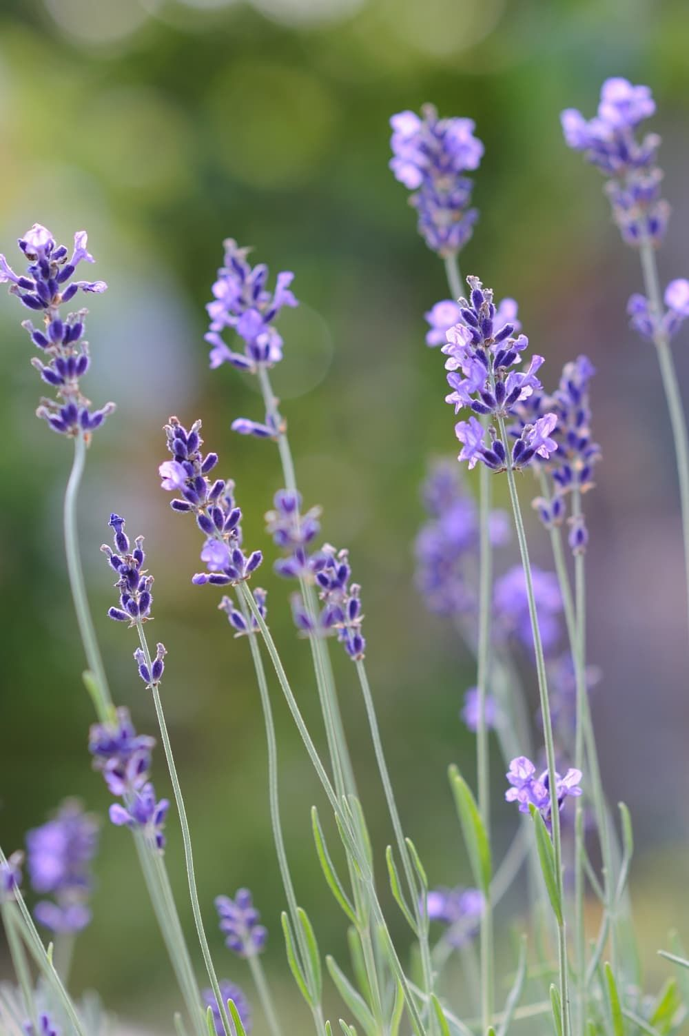 Herbs and Plants that Repel Mosquitos #mosquitoplants