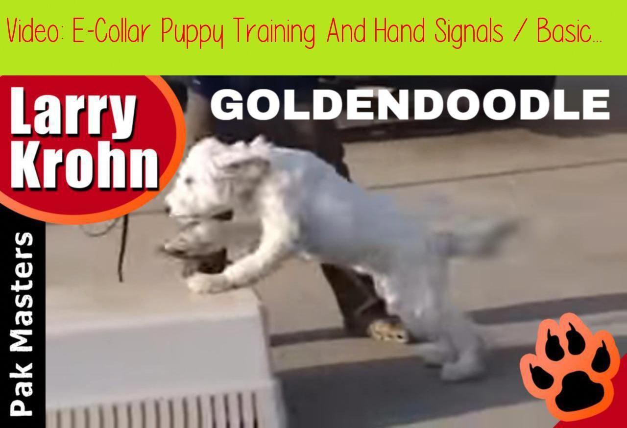 ECollar Puppy Training And Hand Signals / Basic