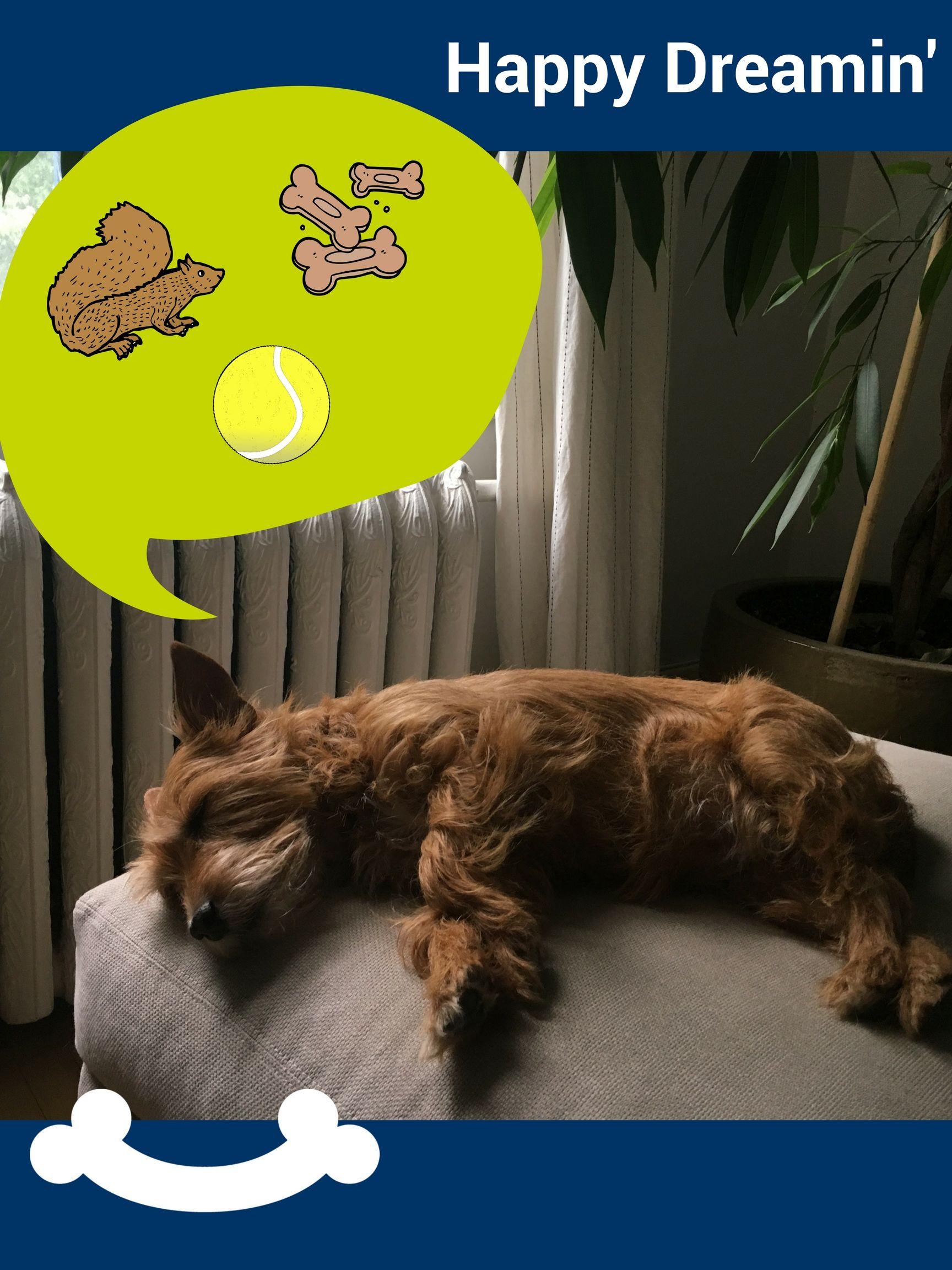 Home Dog Med Laser Meds For Dogs Dog Thoughts Dog Life