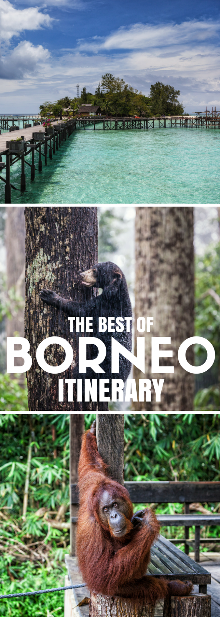 The best of Borneo squeezed into a 2-week itinerary: orangutans, proboscis monkeys, pygmy elephants,…