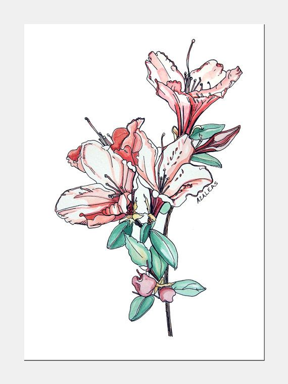 Azalea Flowers 5x7 Watercolor Ink Art Illustration Print Floral Flower Azaleas Flower Drawing Flower Art Ink Art